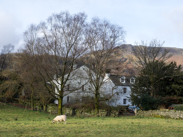 Sheep in field at Rosthwaite