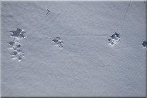 NY4614 : Animal Tracks by Michael Graham