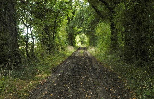 Old Lane, Littleton Drew, Wiltshire 2011