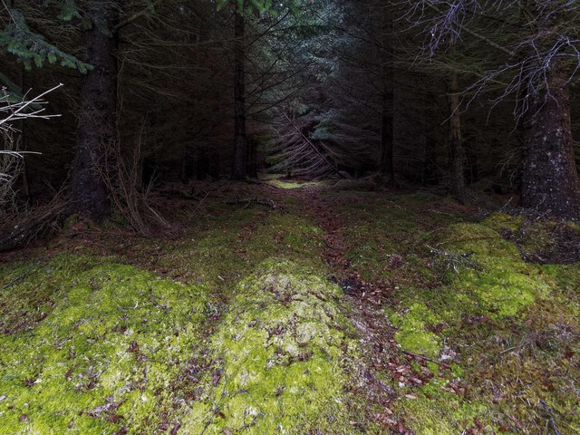 Moss covered track through Torr Mòr forest