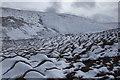 NY4514 : Longgrain Beck by Michael Graham