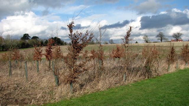 A new tree plantation by Highfield Farm