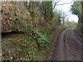 SO8079 : Hollies Lane near Hollies Farm by Mat Fascione