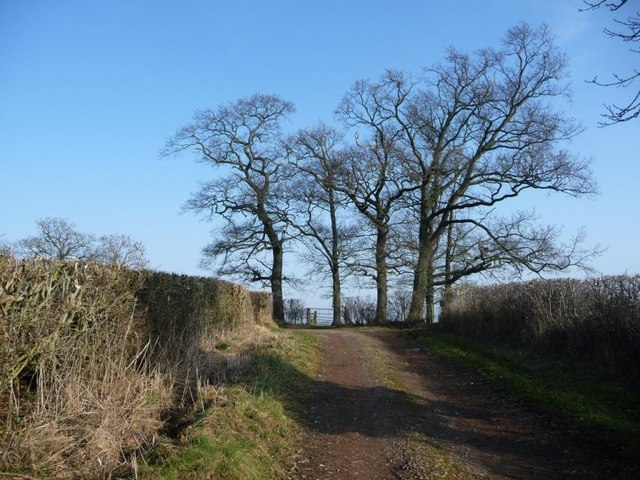 Trees at a bend in Hoggs Lane