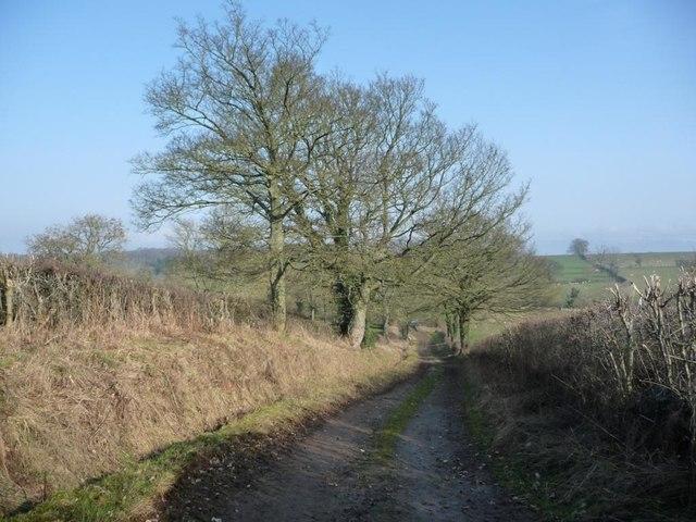 Trees along Hoggs Lane