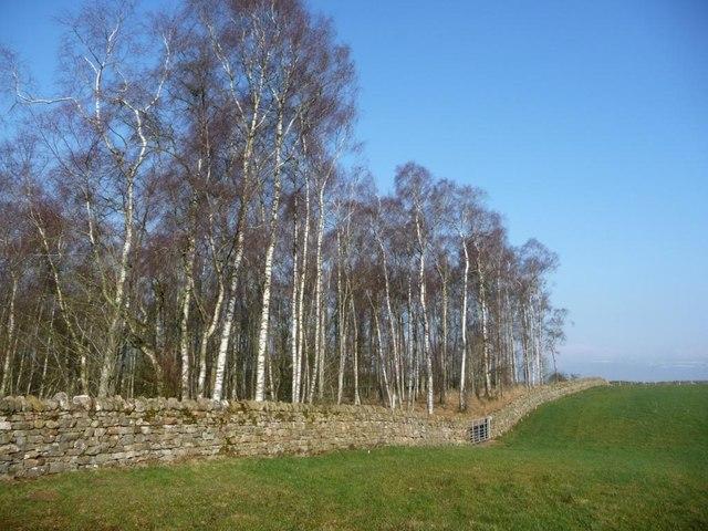 Land-use boundary, north of Burwain Hall