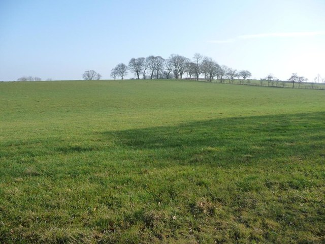 Trees where three fields meet, north-east of Burwain Hall
