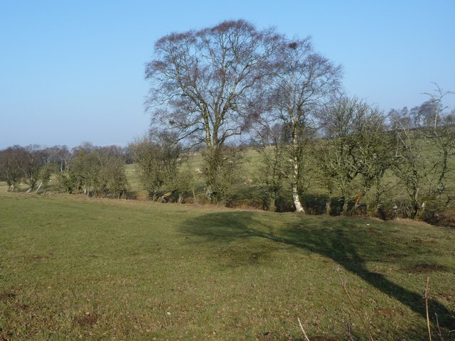 Trees, off Chitty Hill