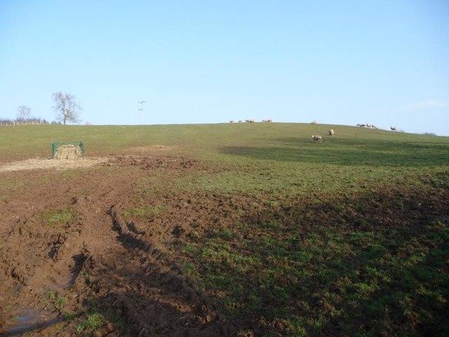 Sheep pasture between Peaslands and Littlebeck