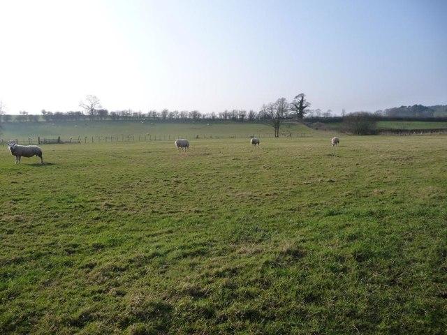 Sheep grazing at Littlebeck