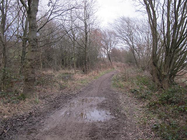 Muddy bridleway, Spring Wood