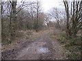 SE3531 : Muddy bridleway, Spring Wood by Stephen Craven