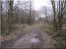 SE3531 : Muddy bridleway, Spring Wood by Stephen Craven