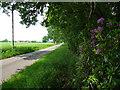 TF9722 : Greatheath Road near North Elmham by Stephen Richards