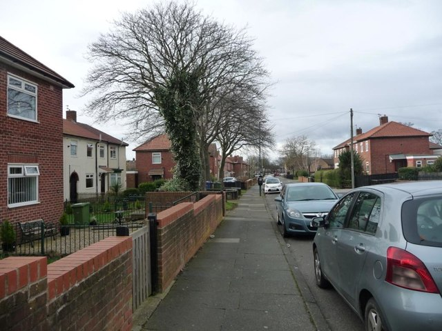 Trees on the south side of Borough Road