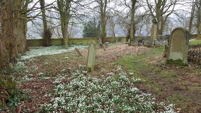 Snowdrops in the churchyard at Haydon Old Church