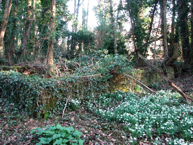 Overgrown hut foundation