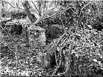 TG2004 : WW2 hut foundations by Evelyn Simak