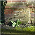 SP3066 : Bench mark, St Mark's Road by Alan Murray-Rust