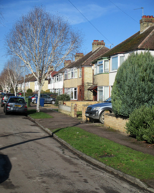 Langham Road: silver birch and semi-detached