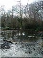 TQ7109 : Pond in Highwoods, Bexhill by PAUL FARMER