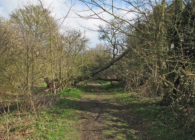 A fallen tree on Mere Way
