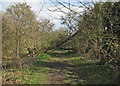 TL4562 : A fallen tree on Mere Way by John Sutton