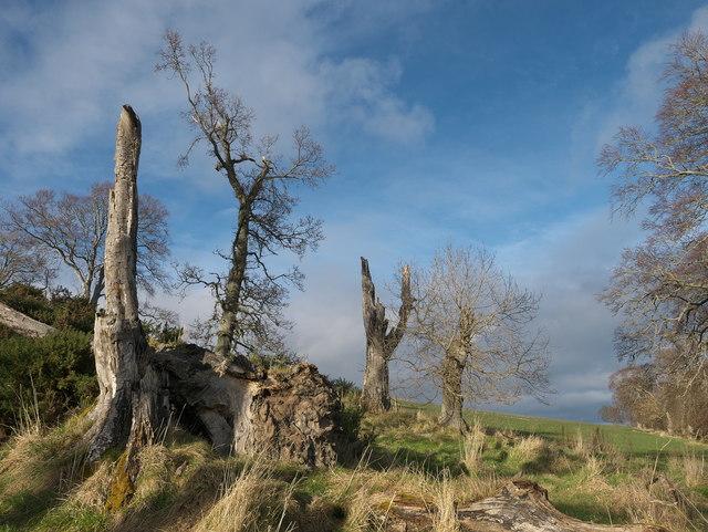 Storm damaged trees above McFarquhar's Bed