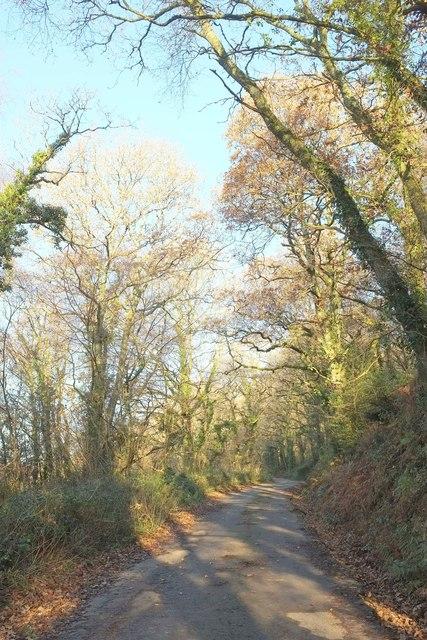 Lane to Whitsleigh Cross