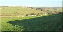 SS5318 : Sheep, Kingscott by Derek Harper