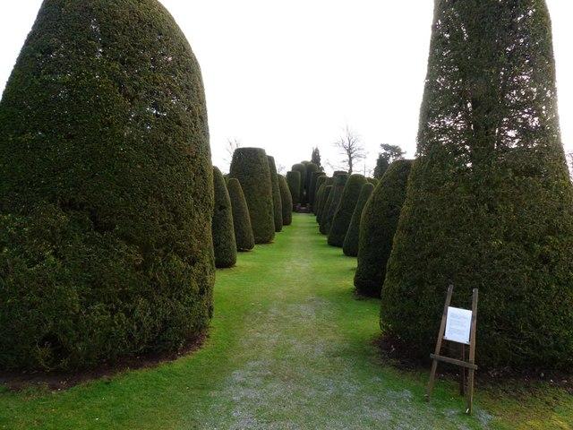 Yew garden, Packwood House