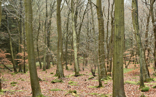 Creighton's Wood, Ballymenagh, Holywood - March 2017(1)