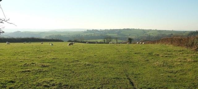 Sheep, Winscott Barton