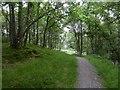 NH4923 : Newly surfaced path by Richard Webb