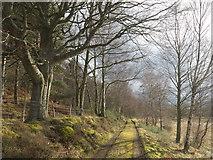 NH6750 : Track to Pitlundie by Julian Paren