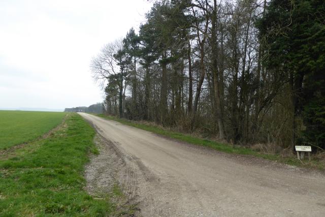 Track to High Bellmanear