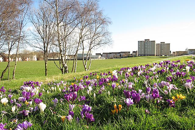 Park in West Pilton