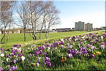 NT2276 : Park in West Pilton by Anne Burgess