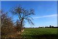 SE4465 : Lower Dunsford Ings by Chris Heaton