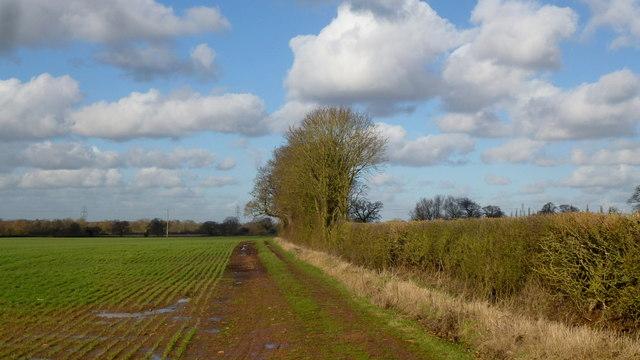Field edge, flat arable land