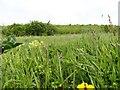 NZ0950 : Wild flower meadow by Robert Graham