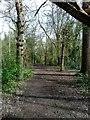 TQ5901 : Decoy Wood, Hampden Park by PAUL FARMER