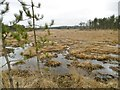 SY9091 : Wareham Forest, wet heathland by Mike Faherty