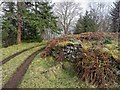 NH5528 : Forestry track Whitefield by valenta