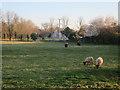 TL4151 : Manx Loaghtan sheep by Button End by Hugh Venables