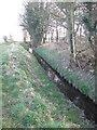 SE8142 : Drainage  ditch  alongside  Butcherclose  Plantation by Martin Dawes