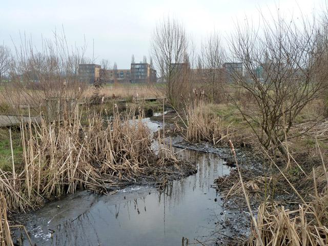 Quaggy River in Sutcliffe Park