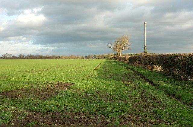 Field and boundary, Newfields Farm