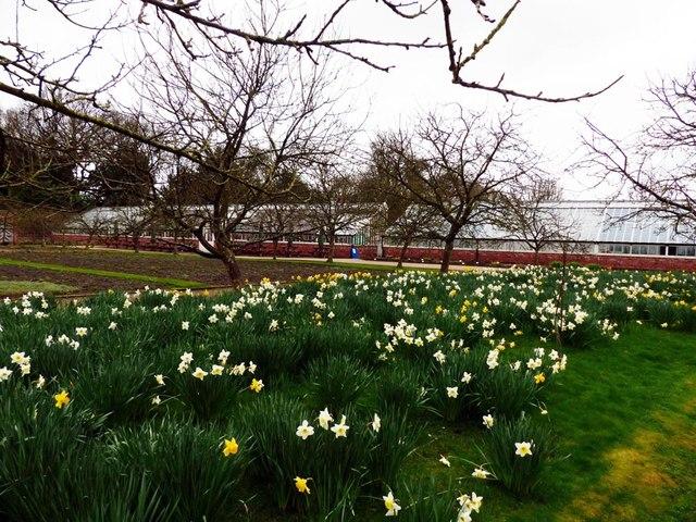 Spring display, Grappenhall Heys walled garden