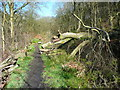 SD9829 : Wadsworth Footpath 34 and a fallen tree by Humphrey Bolton